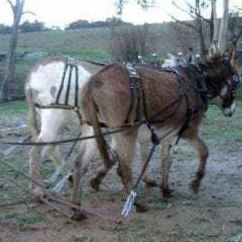 Donkeysathome 11