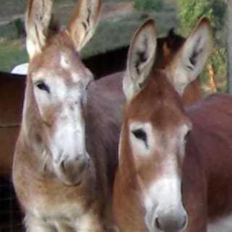 Donkeysathome 13