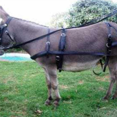 Donkeysathome 14