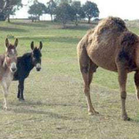 Donkeysathome 4