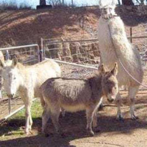 Donkeysathome 6