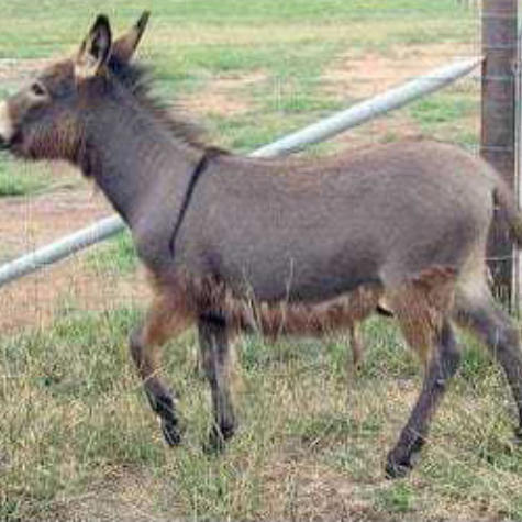 Donkeysathome 7