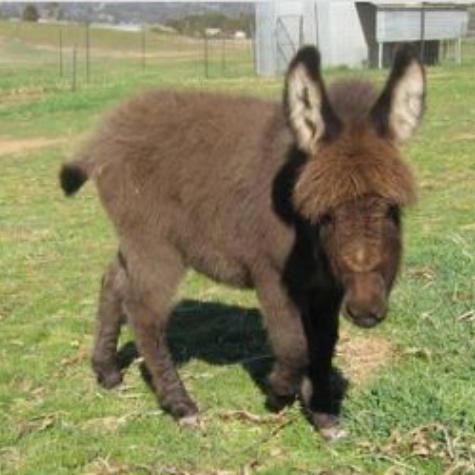 Donkeymagickocacola