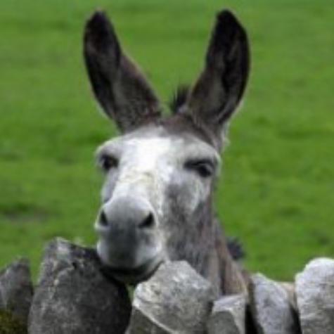 Donkeyonlinkspage