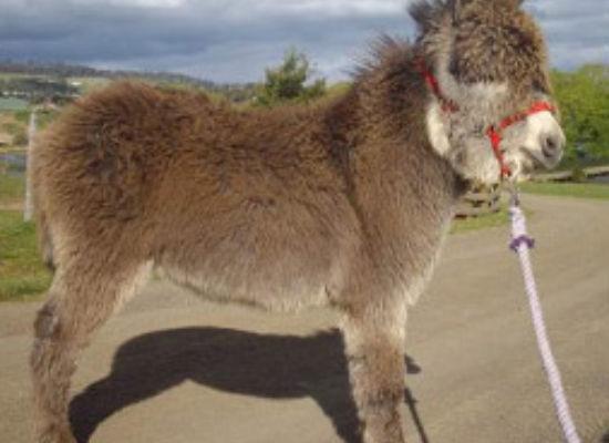 Foals 2008 / 2009
