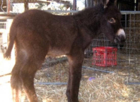 Foals 2009 / 2010