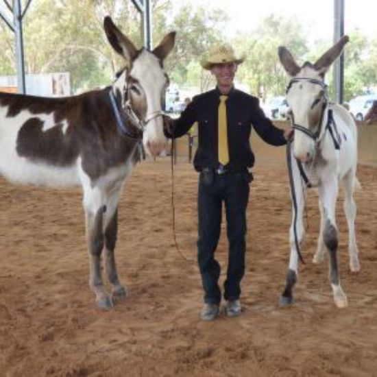 National Donkey All Breeds Show