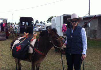 Cootamundra Young stock & Foal show