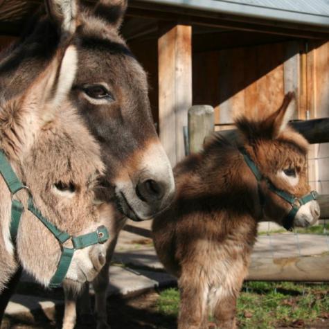Donkey Information