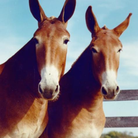 The Canadian Donkey & Mule Association