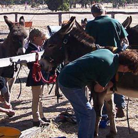 Donkey Society of Western Australia