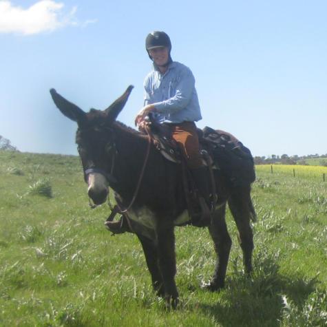 Southern Sky Mammoth Jackstock & Saddle Donkeys (NSW) Barry & Pat Emmett