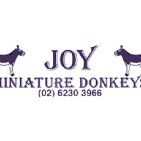 Joy Miniature Donkeys (NSW) Joan Young