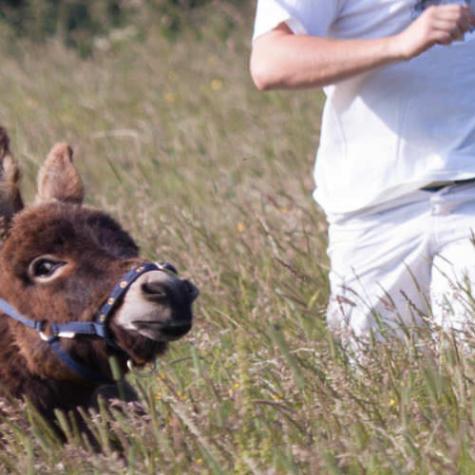 Miniature Mediterranean Donkey Association (UK)